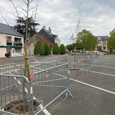 Des arbres sur la place Honoré Combe